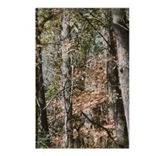 Realistic Tree Forest Cam Postcards (Package of 8)