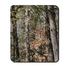 Realistic Tree Forest Camo Mousepad