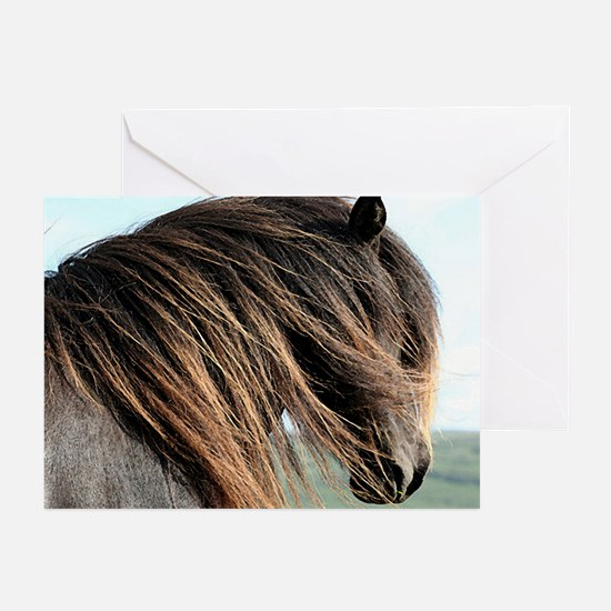 Icelandic Horse Portrait Greeting Cards