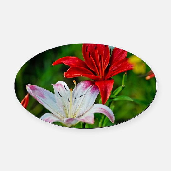 Red and White Lilies Oval Car Magnet