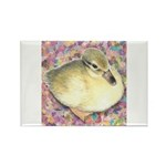Snowy Mallard Duckling Rectangle Magnet (100 pack)