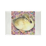 Snowy Mallard Duckling Rectangle Magnet (10 pack)