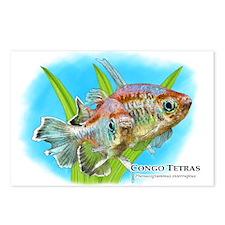 Congo Tetras Postcards (Package of 8)