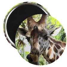 """WILD GIRAFFE 2.25"""" Magnet (10 pack)"""