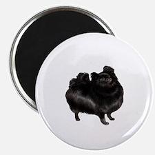 Pomeranian (blk) Magnet