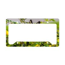 Cool Butterflies License Plate Holder