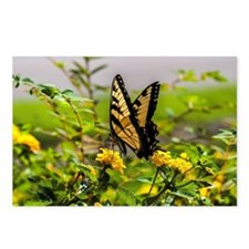 Funny Butterflies Postcards (Package of 8)