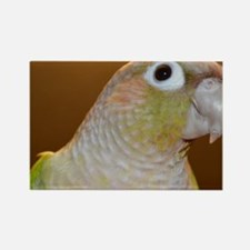 Conure bird portrait Rectangle Magnet