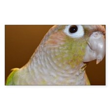 Conure bird portrait Decal