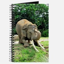 AWESOME ELEPHANT Journal
