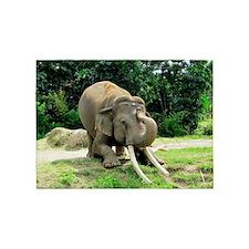 AWESOME ELEPHANT 5'x7'Area Rug