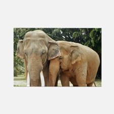 ELEPHANT LOVE Rectangle Magnet