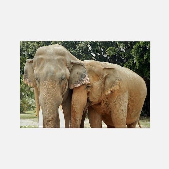 ELEPHANT LOVE Rectangle Magnet (10 pack)