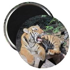 """AWESOME TIGER 2.25"""" Magnet (10 pack)"""