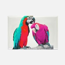 Colorful Parrots Magnets