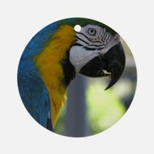 Cute Macaw Round Ornament