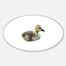 baby goose Sticker (Oval)