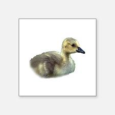"baby goose Square Sticker 3"" x 3"""