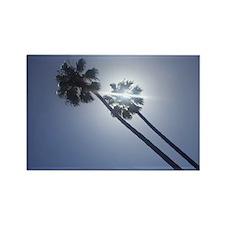 Sunny Palms Rectangle Magnet