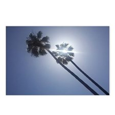Sunny Palms Postcards (Package of 8)