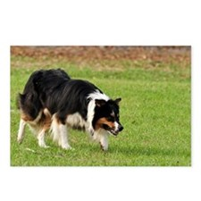 Working Herding Dogs Postcards (Package of 8)