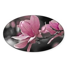 Pink Magnolia Decal