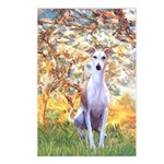 Spring / Whippet Postcards (Package of 8)