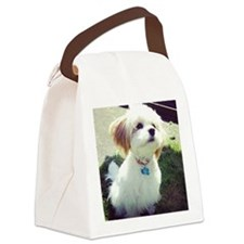 Barney the Cavachon in the sun Canvas Lunch Bag