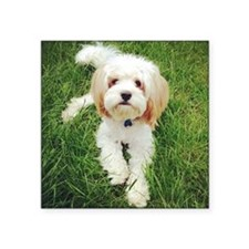 "Barney the Cavachon on the  Square Sticker 3"" x 3"""