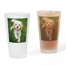 Barney the Cavachon on the grass Drinking Glass