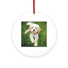Barney the Cavachon on the grass Round Ornament