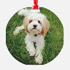 Barney the Cavachon on the grass Ornament
