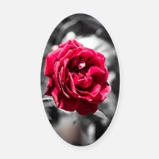 Red Rose on B/W Oval Car Magnet