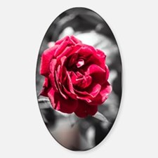 Red Rose on B/W Decal