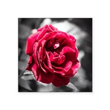 "Red Rose on B/W Square Sticker 3"" x 3"""