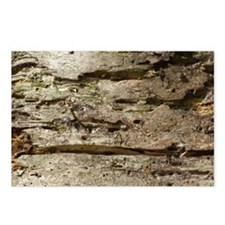 Weathered Wood Postcards (Package of 8)