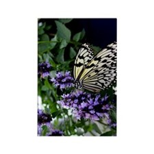 Butterfly Purple Flowers Nature A Rectangle Magnet