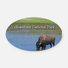 Wild American Buffalo in Yellowsto Oval Car Magnet