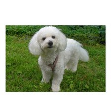 Bichon Frise Style A Postcards (package Of 8)