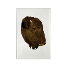 Bison Baby Portrait Rectangle Magnet