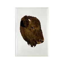 Bison Baby Portrait Rectangle Magnet
