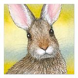 Rabbit Car Magnets