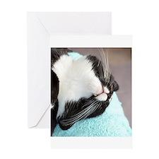 sleeping tuxedo cat Greeting Cards
