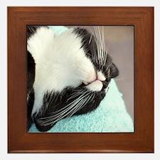 sleeping tuxedo cat Framed Tile