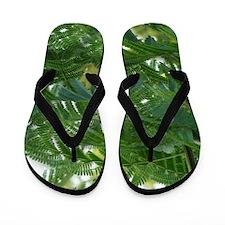 Mimosa Flip Flops