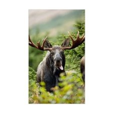 Moose in the Wild Decal