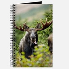 Moose in the Wild Journal