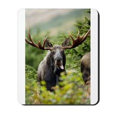 Moose in the Wild Mousepad