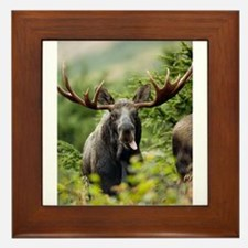 Moose in the Wild Framed Tile