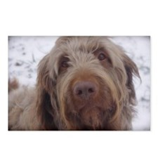 labradoodle 3 Postcards (Package of 8)